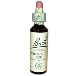7 Chestnut Bud original goutte et alcool Originales