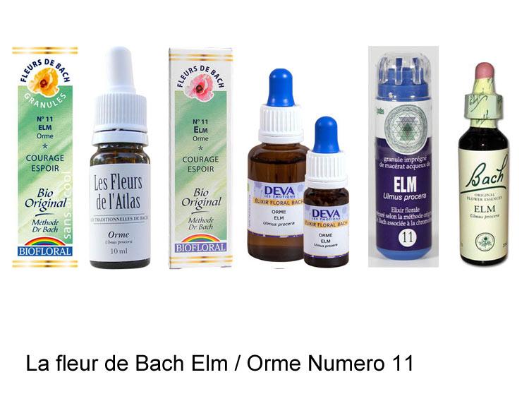 La fleur de Bach Orme ou Elm