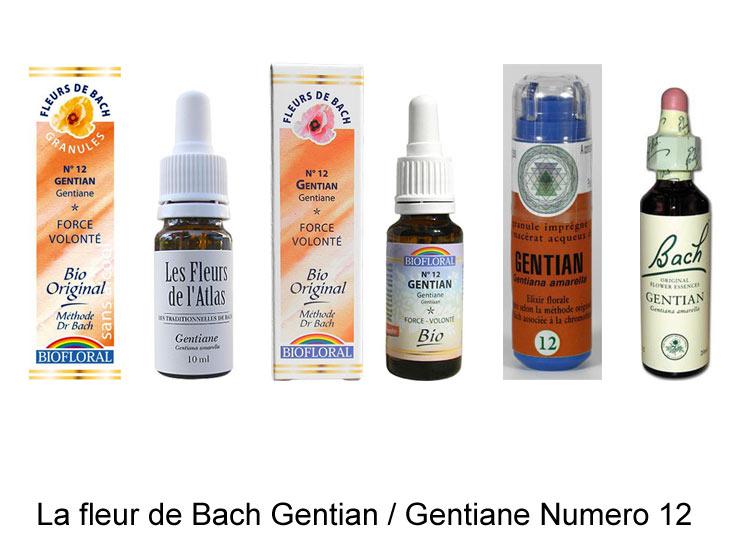 La fleur de Bach Gentiane ou Gentian