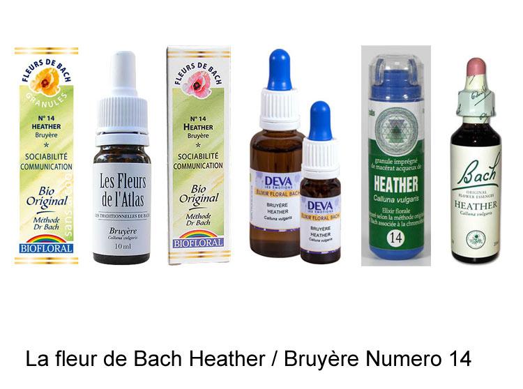 La fleur de Bach Bruyère ou Heather