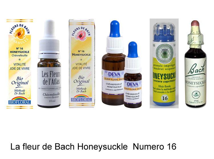 >La fleur de Bach Chèvrefeuille ou Honeysuckle