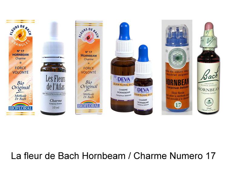 La fleur de Bach Charme ou Hornbeam