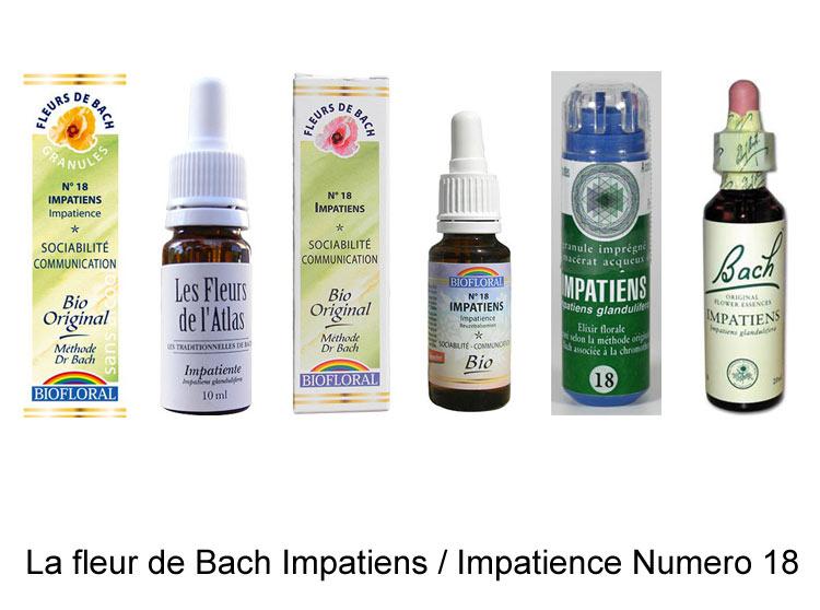 La fleur de Bach Impatience ou impatiens