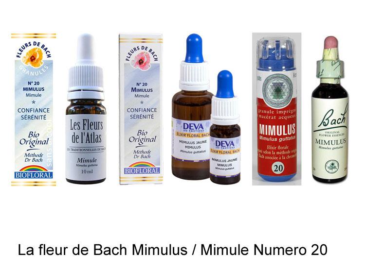 La fleur de Bach Mimule ou Mimulus