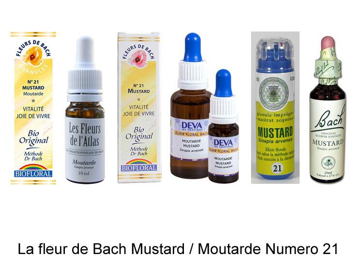 La fleur de Bach Moutarde ou Mustard