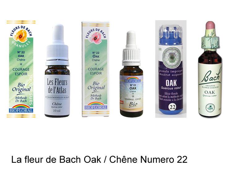 La fleur de Bach Chêne ou Oak