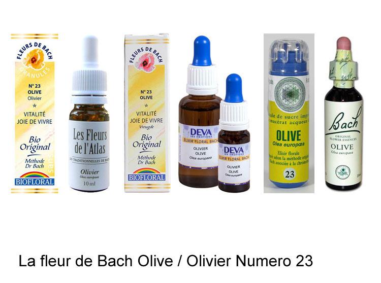 La fleur de Bach Olivier ou Olive