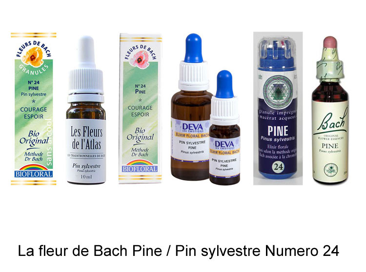 La fleur de Bach Pin Sylvestre ou Pine