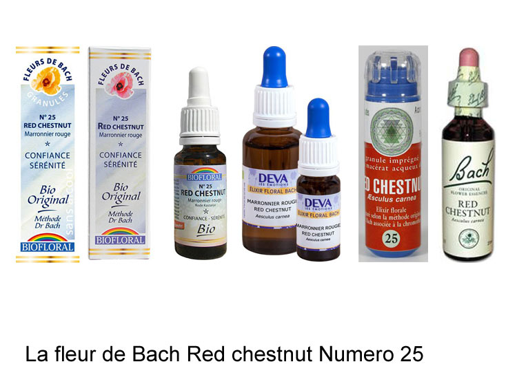 La fleur de Bach Marronnier rouge ou Red chestnut