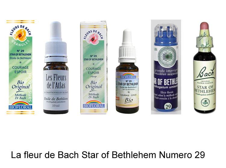 La fleur de Bach Ethoile de Bethléem ou Star of Bethlehem