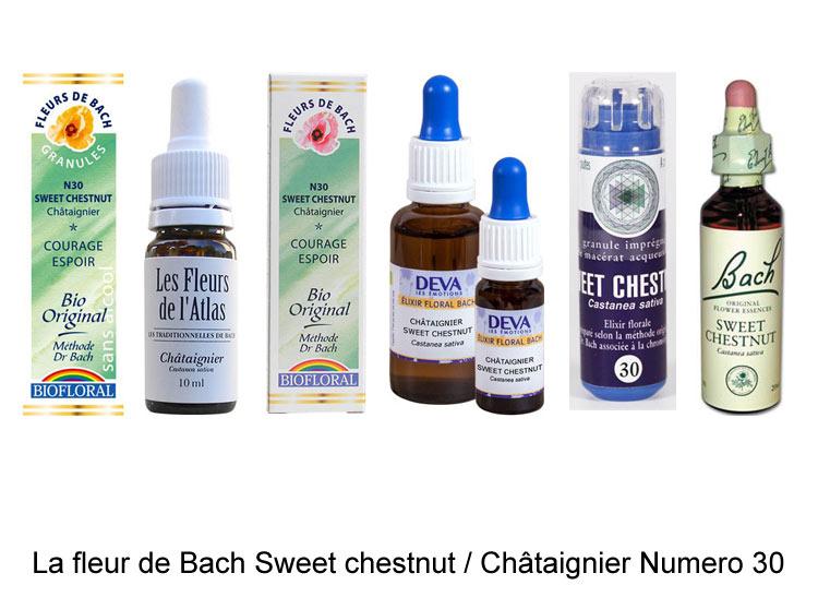 La fleur de Bach Châtaigner ou Sweet chestnut