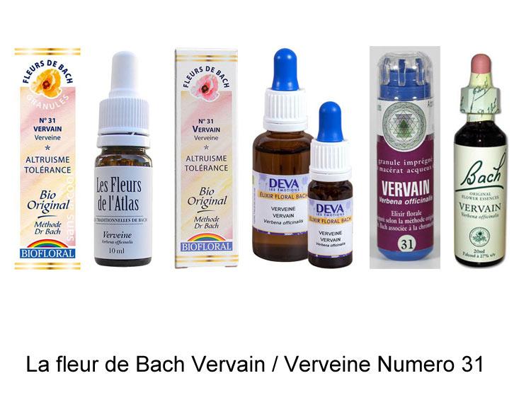 Fleur De Bach Vervain Ou Verveine Numero 31 Verbena Officinalis