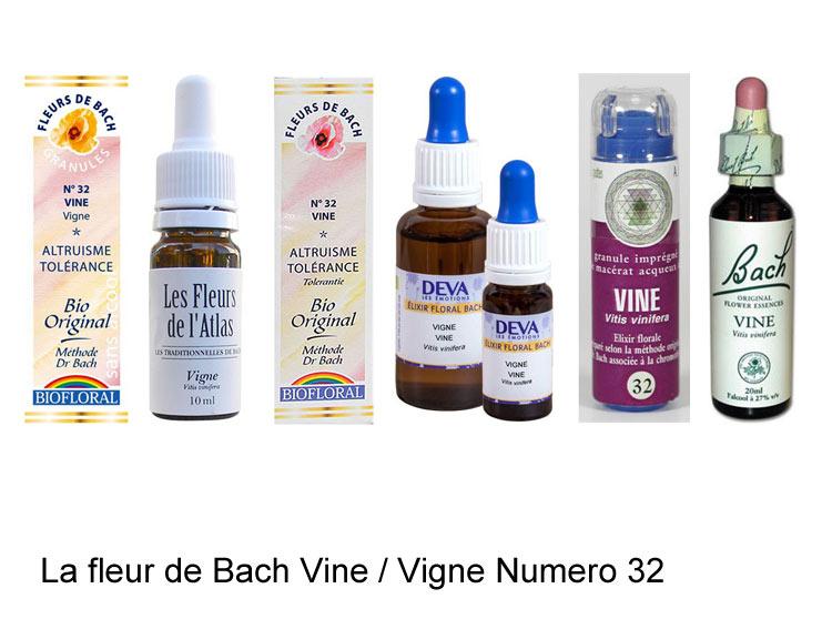 La fleur de Bach Vigne ou Vine