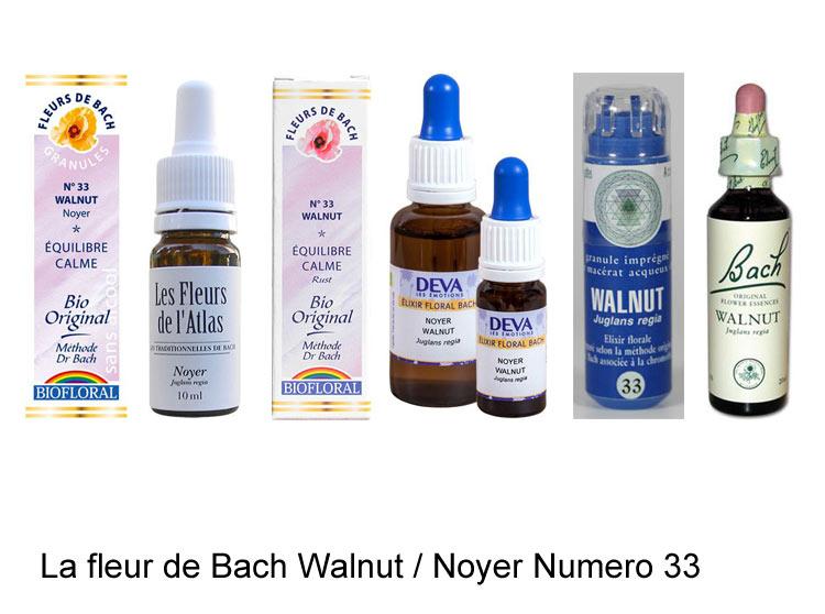 La fleur de Bach Noyer ou Walnut