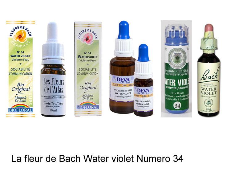 La fleur de Bach Violette d'eau ou Water Violet