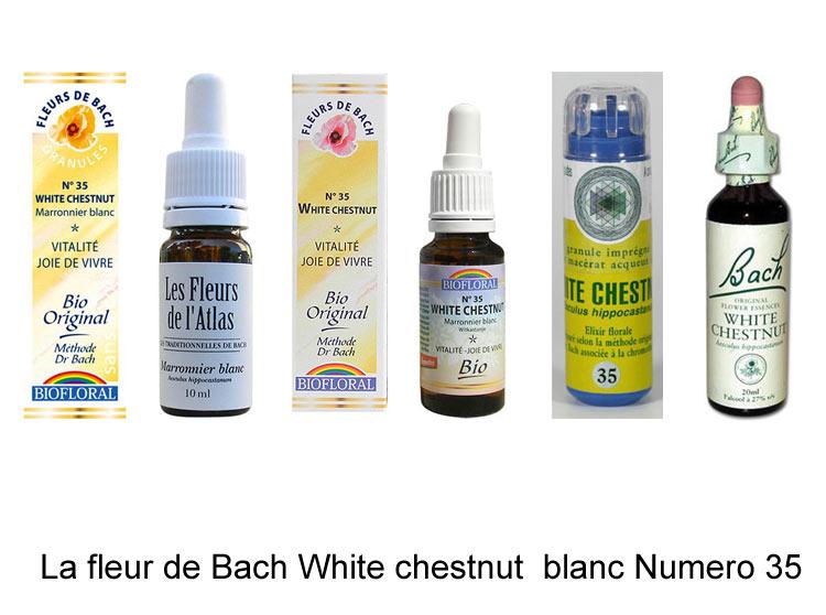 La fleur de Bach Marronnier blanc ou White chestnut