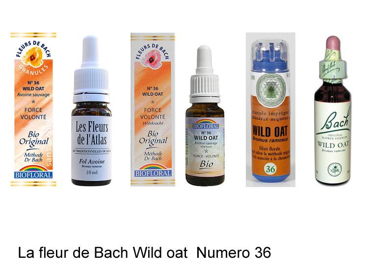 La fleur de Bach Avoine sauvage ou Wild oat